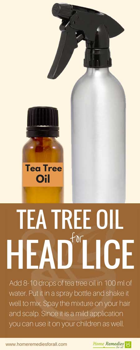 How to make tea tree oil spray for lice