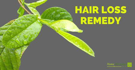 How To Use Guava Leaves To Stop Hair Loss And Promote Regrowth