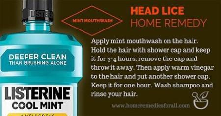 Picture of Head Lice Home Remedies Mint Mouthwash