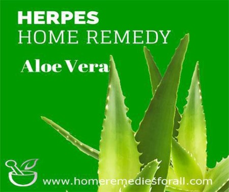 Natural Home Remedies for Herpes Aloe Vera