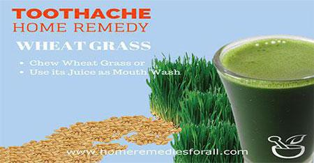 Picture of Home Remedies for Toothache Wheat Grass