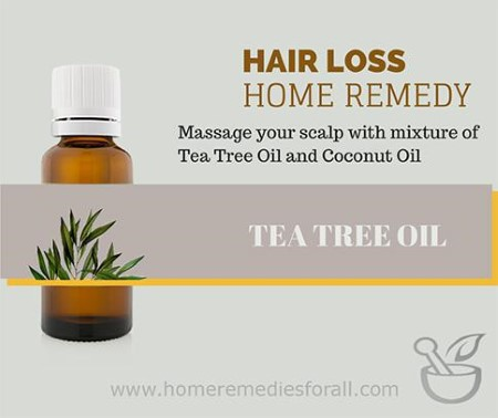 Picture of Home Remedies for hair Loss Tea Tree Oil